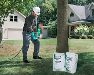 tree fertilization service