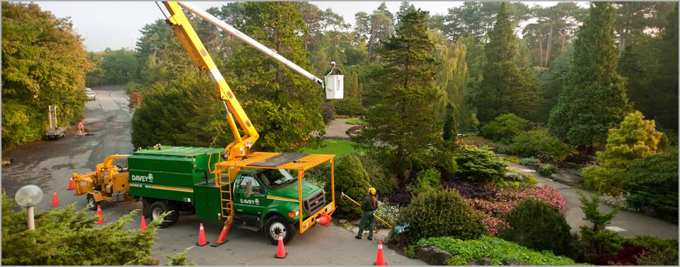 Commercial Tree Services-Full