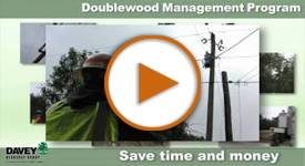 Doublewood Management Video Play
