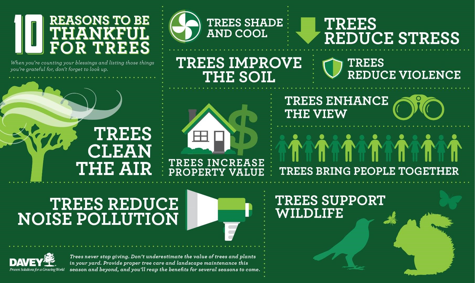 Tree Benefits - 10 Reasons to be Thankful for Trees