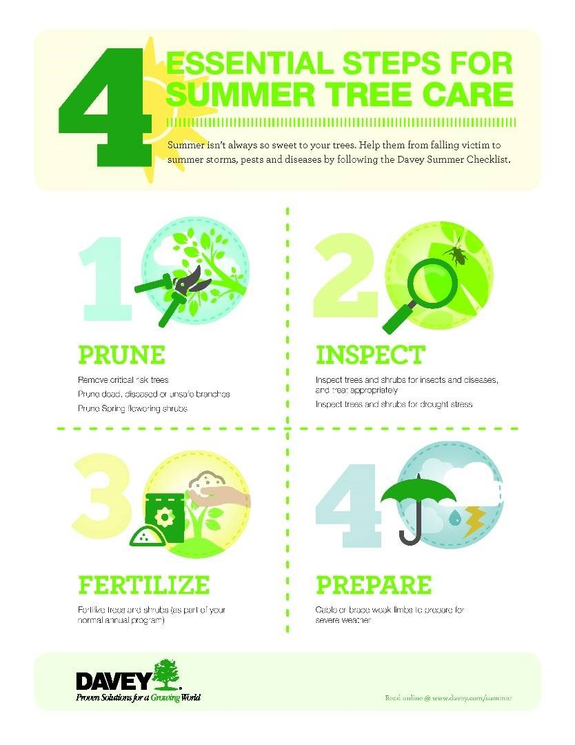 Summer Tree Care Checklist