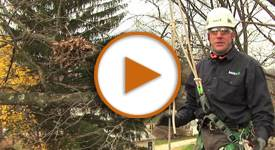 Talking Trees: How to Properly Prune Your Trees