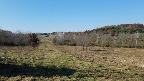 Wills Creek Land Reforestation