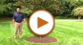Talking Trees: How to Properly Mulch Your Trees
