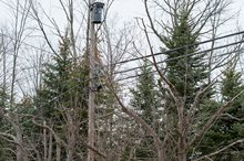 DRG's Lightning Fast Response Scores Weeks Early Completion of Tree Hazard Project