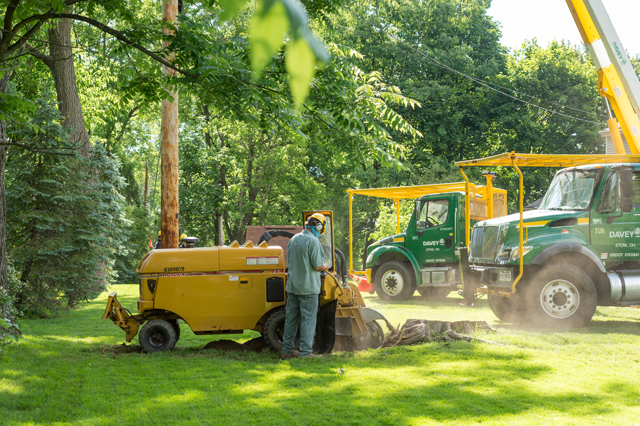 Is Tree Stump Removal Necessary