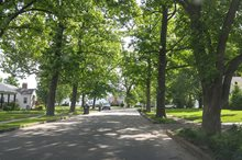 URBAN FORESTRY PROJECT MANAGEMENT, BRENTWOOD, MO