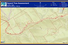 CALTRANS TREE HEALTH ASSESSMENT, NORTHERN CALIFORNIA