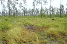WETLAND AND STREAM PERMITS AND DELINEATIONS, MARINE CORPS BASE AT CAMP LEJEUNE, ONSLOW COUNTY, NC