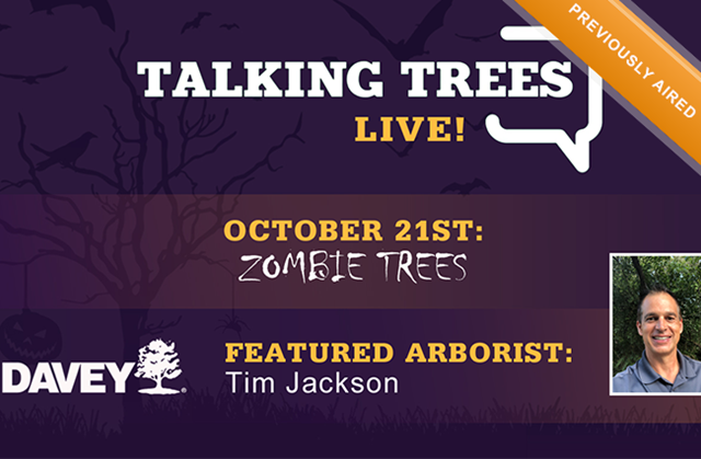 What are Zombie Trees