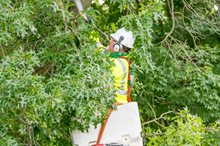Wolf Tree and Davey Crews Work Smart to Stay Safe While Returning Power to Chattanooga Residents