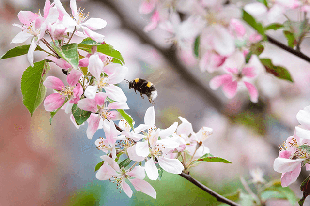Top 5 Trees for Bees