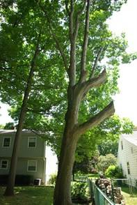 Why Hire a Certified Arborist 1