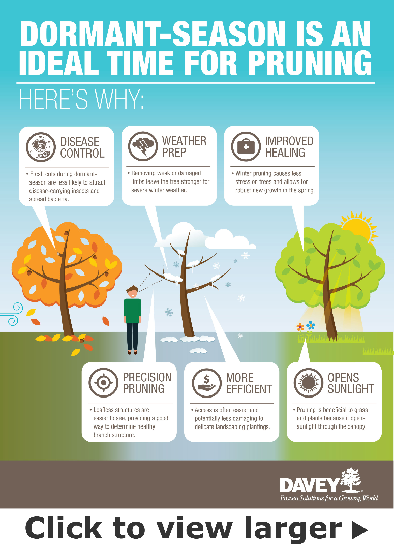 Dormant Season is an Ideal Time For Pruning infographic