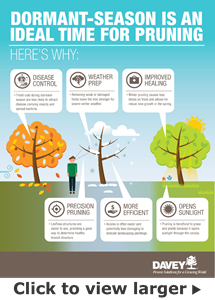 Dormant Pruning Infographic