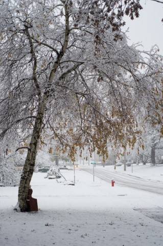 Lessons From The Winter Of A Lifetime An Arborist S